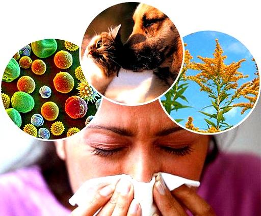 Как определить аллергию