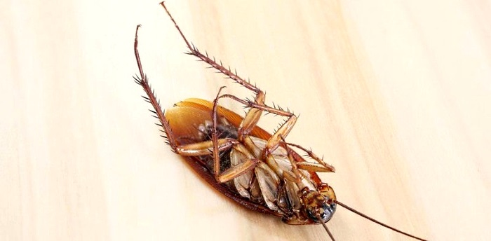 Как быстро вывести тараканов из квартиры