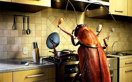 Как вывести тараканов из квартиры навсегда народными средствами