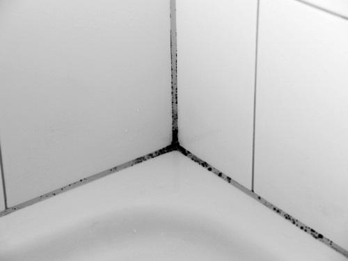 Как удалить плесень в ванной между плитками на стене