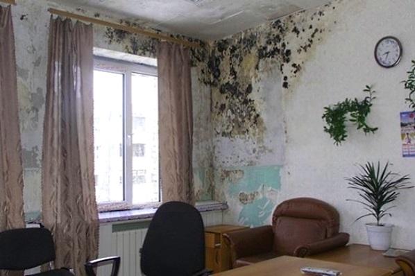 Как удалить плесень со стены в квартире своими руками