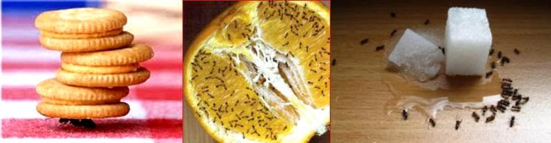 Причины появления муравьев в квартире
